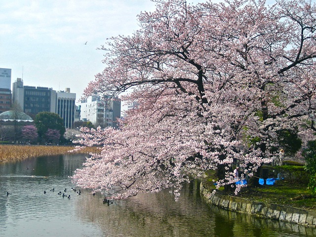 tokio imperial palace vrt